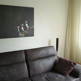 Kundenfoto: Puffins von Edwin van Wijk, auf leinwand