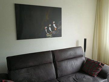 Kundenfoto: Puffins von Edwin van Wijk
