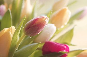Tulpen na een regen van Tanja Riedel