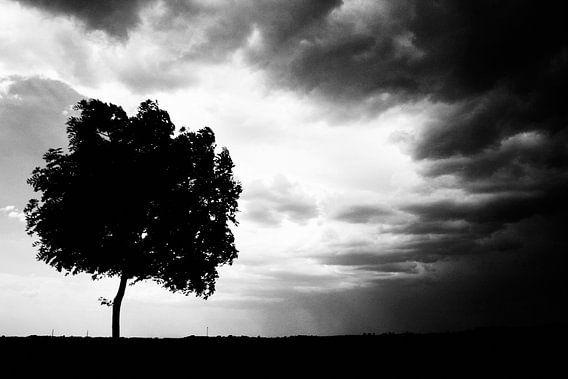 De boom zwart-wit fotografie