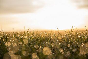 Met duizenden waren ze, samen en toch alleen | Magisch ochtend in het weiland | Zonsopkomst van Wendy Boon