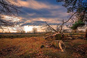 Heidelandschaft im Sonnenuntergang van