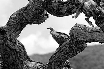 Een gier in een dode boom in Shaba NP. Kenya. van Louis en Astrid Drent Fotografie
