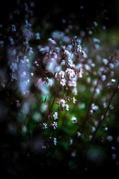 kleine bloemen langs de weg van Norbert Sülzner