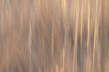 les couleurs de la bruyère sur Tania Perneel