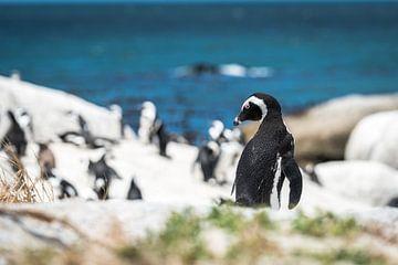 Pinguin sur Trudy van der Werf