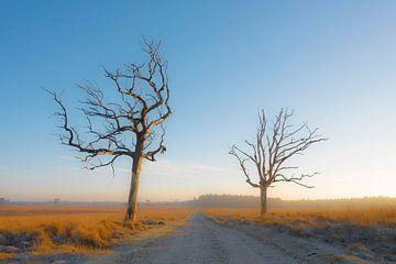 Bäume in der Morgensonne von Ans Bastiaanssen
