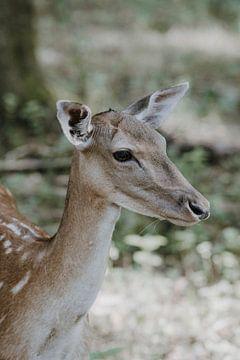 Bambi im Märchenwald von Nadine Rall