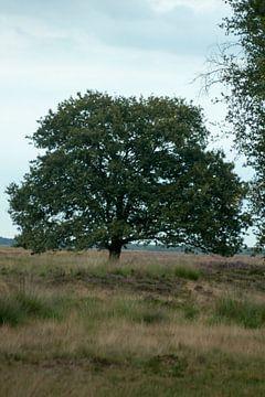 Natuurgebied  van Johan Mulder