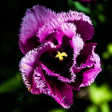 De schoonheid van een simpele tulp van Mike Bot