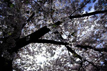 Bloesemboom van KaHoo Wong