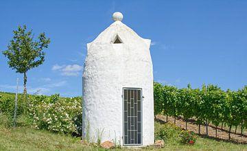 Idylle in de wijngaard van Peter Eckert