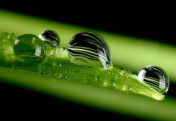 Barley in a Droplet sur Marlies Prieckaerts