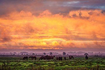 Paarden in de wei tijdens zonsopkomst