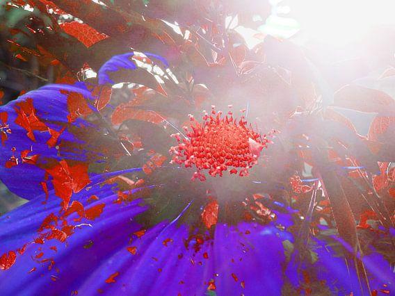 FlowerPower Fantasy 8 van MoArt (Maurice Heuts)