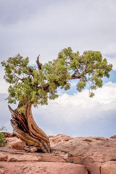 Eenzame boom,  Lonely tree van Lidia Berkers
