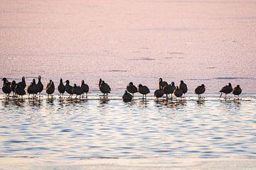 Vogels op het ijs van Margreet Riedstra
