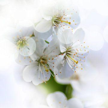 Blossom van Andreas Wemmje