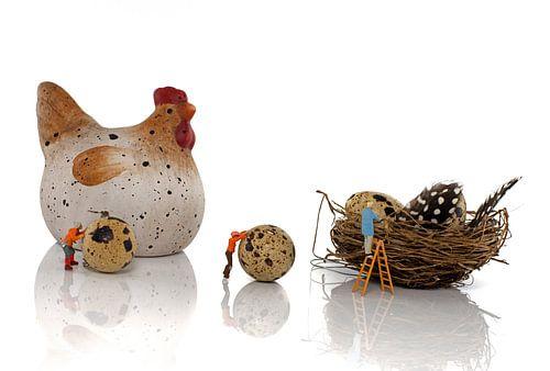 eier productie