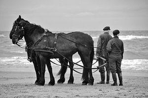 Friesche paarden - Terschelling van Pierre Verhoeven
