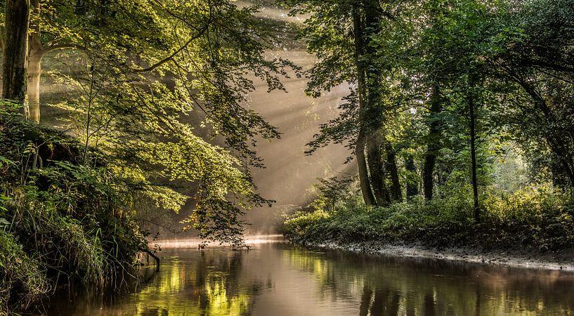 Forest light van Davy Sleijster