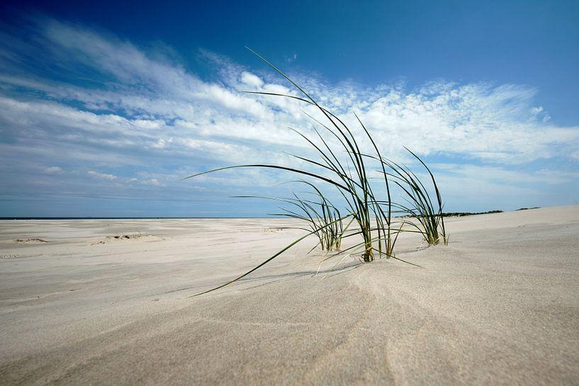 Helmgras op strand Schiermonnikoog van Edwin van Wijk