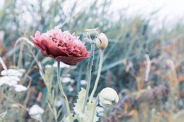 Blume auf dem Feld von Els Broers