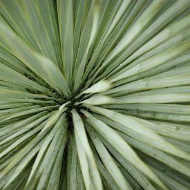 Close-up van een Palmboom   Natuurfotografie van Diana van Neck Photography
