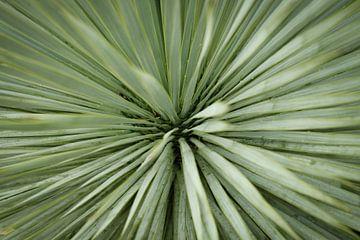 Nahaufnahme einer Palme   Naturfotografie von Diana van Neck Photography