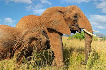 Afrikanische Elefantenmutter mit Kalb von Jan van Dasler