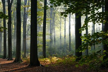 hoge bomen bos van Ann Beckers