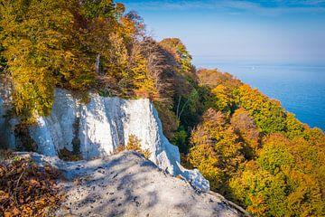 Herbst am Königsstuhl von Martin Wasilewski