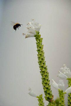 Natuur von Georgina Fotografie