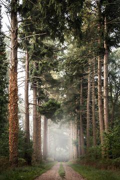 Mistige bomenlaan van Rob Willemsen