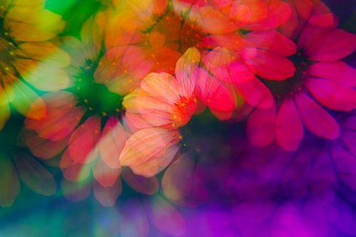 Echinacea gefotografeerd met een prisma