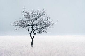 Baum auf gefrorenem Heideland | Reif/Winter in den Niederlanden | Minimalistische Landschaft von Marijn Alons