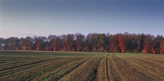 Groote Heide 1 van Desh amer