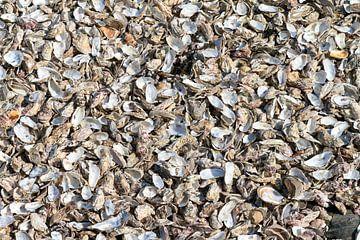 Lege oesters op het strand van Cancale van Dennis van de Water