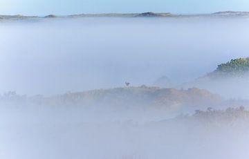 sprookjesachtig landschap van Remco Van Daalen