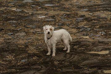 Hond aan zee van Henk Hartzheim