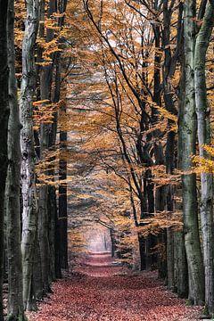 Waldallee im Herbst von Coen Weesjes