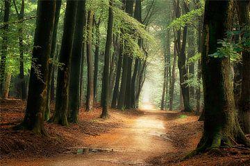 Het pad naar Wonderland