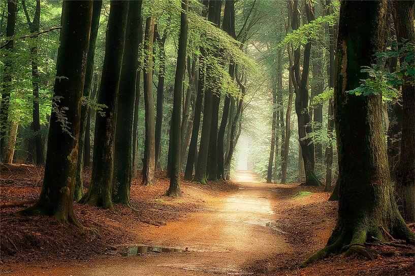 Het pad naar Wonderland van Rigo Meens
