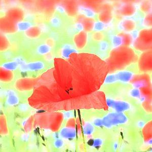 poppies von
