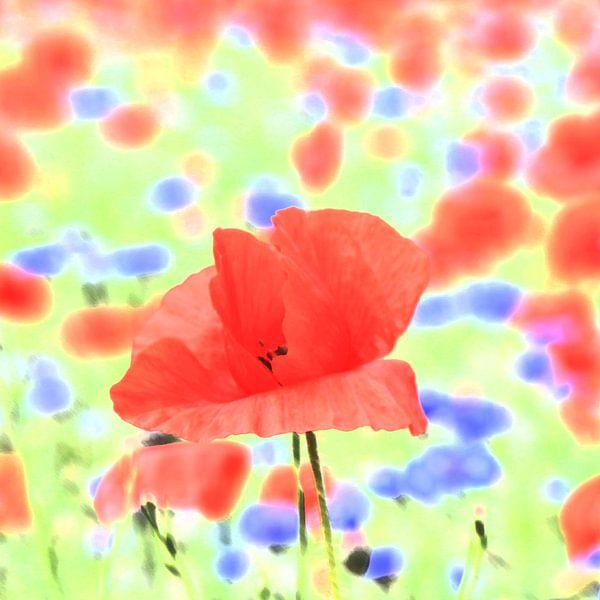 poppies von Falko Follert