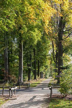 bomen in herfstkleur