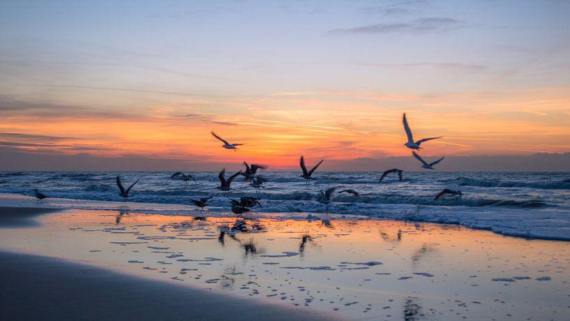 Zonsondergang met meeuwen van Richard Steenvoorden