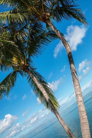 Palmbomen met blauwe lucht en zee op de achtergrond