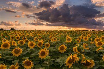 Sunsetflowers van Jaco Verheul