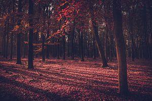 Het rode sprookjesbos van